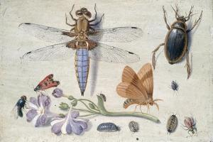 A Cockchafer, Beetle, Woodlice and Other Insects, with a Sprig of Auricula, Early 1650S by Jan van Kessel