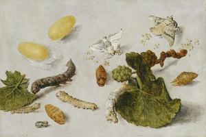 Die Verwandlung der Seidenraupe by Jan van Kessel