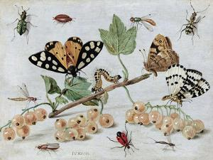 Insects and Fruit by Jan van Kessel