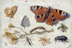 Three Butterflies, a Beetle and Other Insects, with a Cutting of Ragwort, Early 1650S by Jan van Kessel