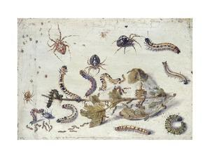 Various Spiders and Caterpillars, with a Sprig of Gooseberry, Early 1650S by Jan van Kessel