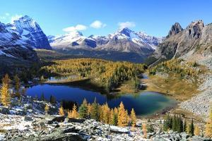 Autumn Colors at Opabin Plateau, Yoho Np, Canada by Jan Zwilling