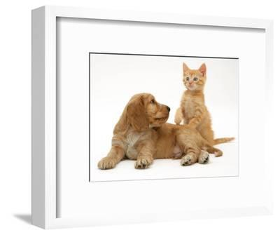Ginger Kitten with Golden Cocker Spaniel Puppy