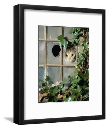Tabby Tortoiseshell in an Ivy-Grown Window of a Deserted Victorian House