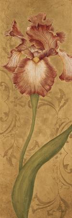 Iris Elegance II