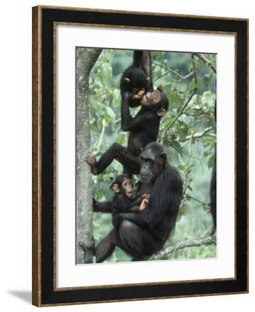 Gombe National Park — - Tanzania Tourism
