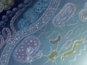 Painting of 17 Types of Bacteria by Jane Hurd by Jane Hurd