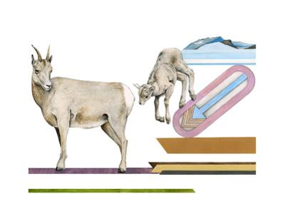 Migrating Mural Concept: Sierra Nevada Bighorn Sheep by Jane Kim