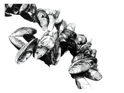 Mussels by Jane Kim