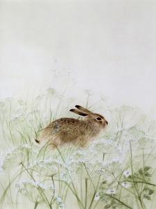 Rabbit by Jane Neville