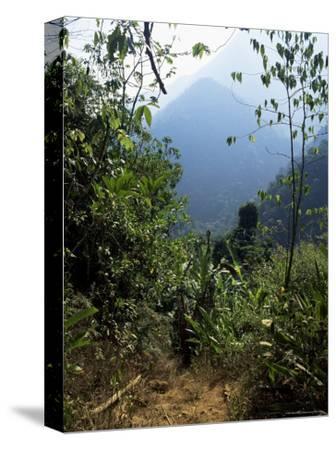 Jungle, Sierra Nevada, Colombia, South America