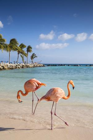 Caribbean, Netherland Antilles, Aruba, Renaissance Island, Flamingo beach