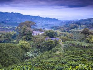 Colombia, Caldas, Manizales, Chinchina, Coffee Plantation at Hacienda De Guayabal at Dawn by Jane Sweeney