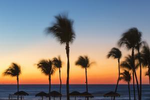 Cuba, Varadero, Palm Trees on Varadero Beach at Sunset by Jane Sweeney