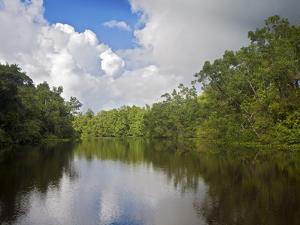Delta Amacuro, Orinoco Delta, Venezuela, South America by Jane Sweeney