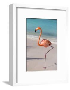Flamingo on Flamingo Beach, Renaissance Island, Oranjestad, Aruba, Lesser Antilles by Jane Sweeney