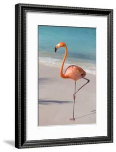 Flamingo on Flamingo Beach, Renaissance Island, Oranjestad, Aruba, Lesser Antilles by Jane Sweeney