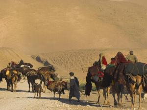 Kuchie Nomad Camel Train, Between Chakhcharan and Jam, Afghanistan, Asia by Jane Sweeney