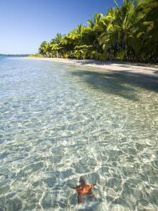 Panama, Bocas Del Toro Province, Colon Island Star Beach, Star Fish in Sea by Jane Sweeney