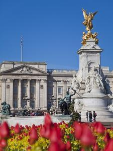 Tulips in Front of Buckingham Palace and Victoria Memorial, London, England, United Kingdom, Europe by Jane Sweeney