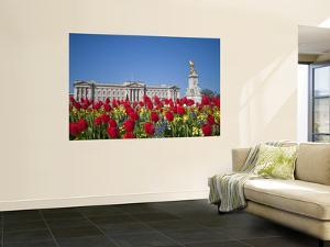 United Kingdom, London, Westminster, Tulips Infront of Buckingham Palace and Victoria Memorial by Jane Sweeney