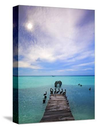Venezuela, Archipelago Los Roques National Park, Madrisque Island, Pelicans on Pier