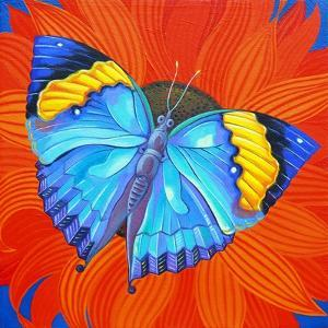 Indian Leaf Butterfly, 2014 by Jane Tattersfield