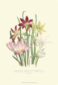 Lily Garden I by Jane W^ Loudon