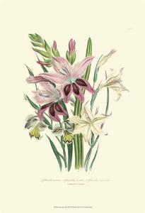 Lily Garden II by Jane W^ Loudon