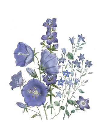 Loudon Florals II