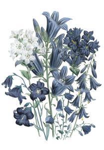 Loudon Florals III by Jane W^ Loudon