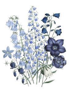 Loudon Florals IV by Jane W^ Loudon