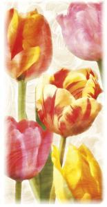 Glowing Tulips II by Janel Pahl