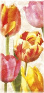 Glowing Tulips II by Janel Pahl