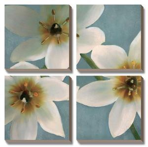 Lily Parfait I by Janel Pahl