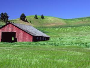 Barn in Field of Wheat, Palouse Area, Washington, USA by Janell Davidson