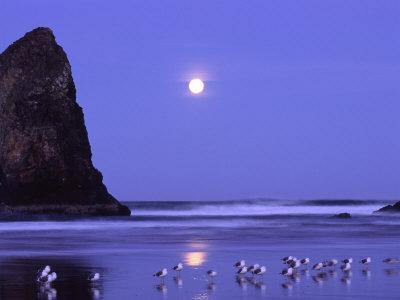 Full Moon and Seagulls at Sunrise, Cannon Beach, Oregon, USA