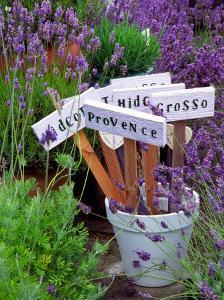 Lavender Stakes with Names and Lavender in Pots, Washington, USA by Janell Davidson