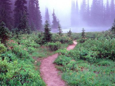 Path to Reflection Lake, Mt. Rainier National Park, Washington, USA
