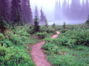 Path to Reflection Lake, Mt. Rainier National Park, Washington, USA by Janell Davidson