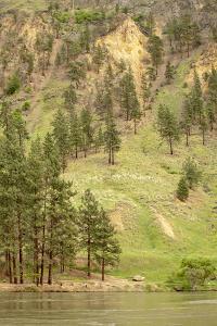 Hells Canyon National Recreation Area, Washington, USA. Eroded hillsides along the Snake River. by Janet Horton