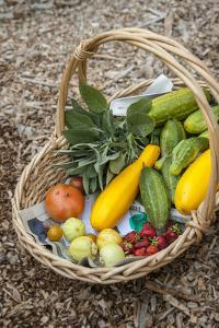 Issaquah, WA. Freshly harvested produce, including cucumbers, squash, strawberries, and tomatoes. by Janet Horton