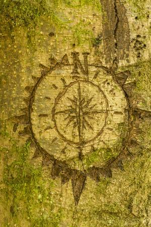 Issaquah, Washington State, USA. Carving of a compass on a moss-covered tree.