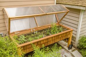 Issaquah, Washington State, USA. Wood greenhouse with a polycarbonate cover and grow lights. by Janet Horton