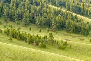 National bison Range, Montana, USA. Palouse Prairie grasslands on steep hills. by Janet Horton