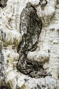 Nisqually National Wildlife Refuge, Nisqually, Washington State, USA. Tree with no bark. by Janet Horton