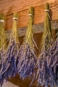 San Juan Island, Washington State, USA. Lavender hung to dry. by Janet Horton