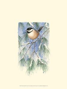 Chickadee in White Pine by Janet Mandel