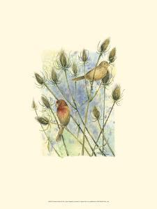 House Finches by Janet Mandel