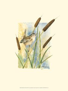 Marsh Wren and Cattails by Janet Mandel